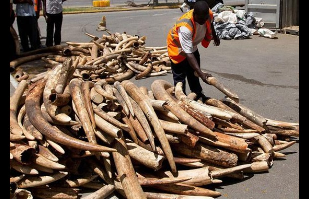 Elephant tusks seized in Kenya