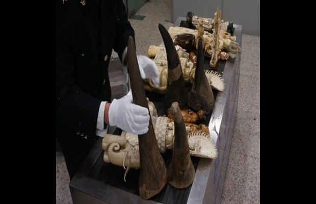 Rhino horns seized in China