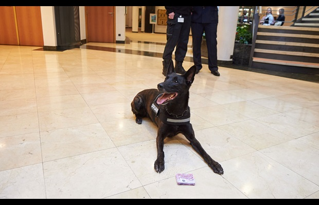 Luxembourg Customs dog and handler teams demonstrate their capacity to detect cash