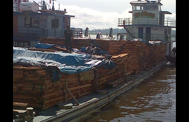 Authorities also seized two vessels attempting to transport illicit timber.