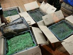 Thai Customs seized more than 4,500 turtles and 35 live fishes from a van.