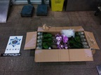 Macau (China) Customs stopped a pedestrian at a land border, transporting 18kg of orchids.
