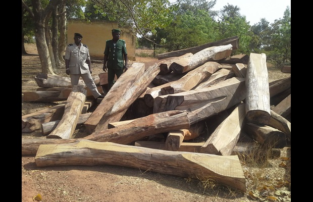 In January 2014, 30,000 kg of rosewood were intercepted by Burkina Faso Customs at the border to Ghana.