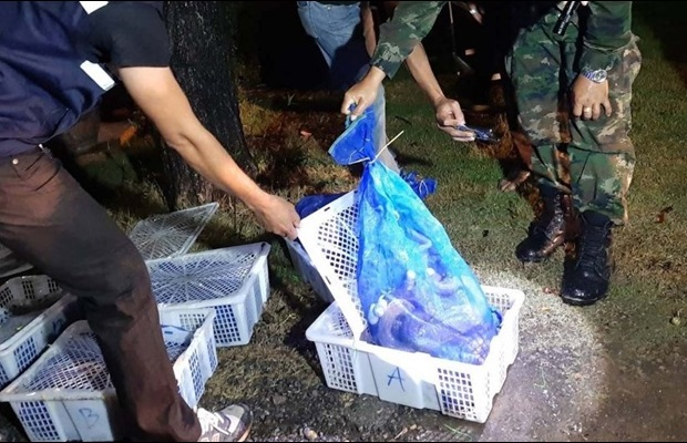 Thai authorities seize snakes from a van