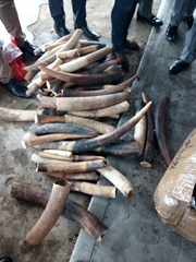140 kg of ivory seized by Nigeria Customs on 23 July 2017