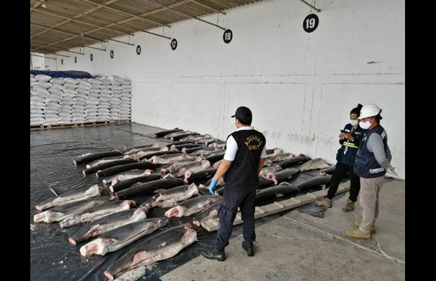 Based on risk profiling, Peru Customs intercepted on the road 5 tonnes of shark meat, transported in motorcycles with trailers (Photo: Courtesy of Peru Customs) .