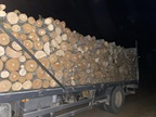North Macedonian authorities seized over 300 m3 of illegally sourced timber over the course of Operation Thunder 2020 (Photo: Courtesy of North Macedonia Customs) .
