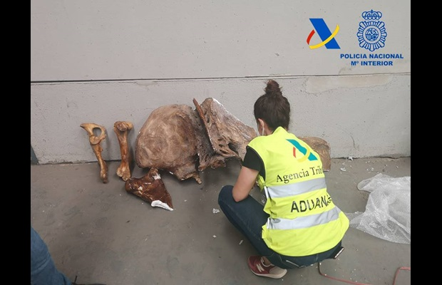 Spanish Customs officers seized more than 4,000 fossils in a container during the Operation Corsair (Photo: Courtesy of Spanish Customs and Spanish National Police)