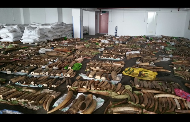 Singapore makes the largest seizure of illegal wildlife products in decade